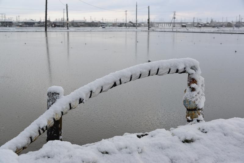 レンコン畑の雪-4