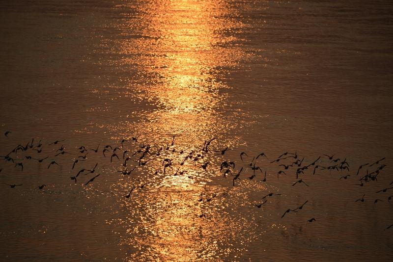 夕陽に飛ぶ-2
