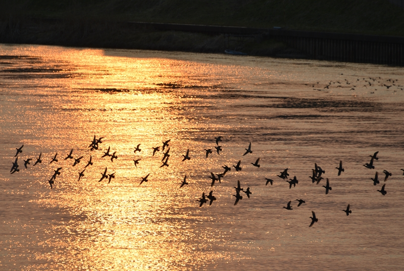 夕陽に飛ぶ-3