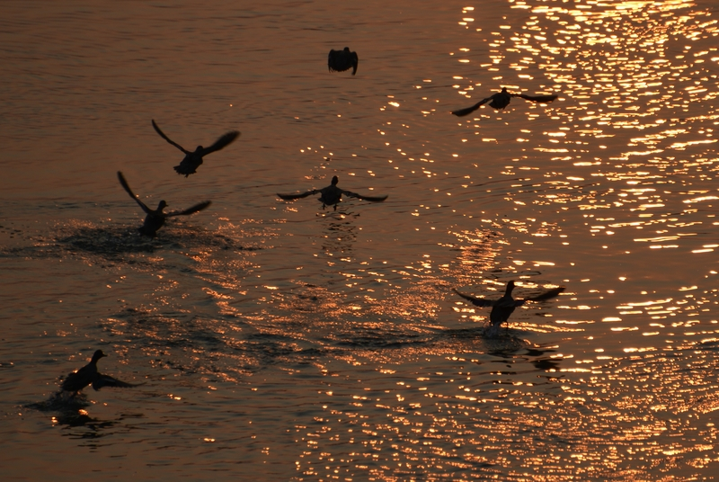 夕陽に飛ぶ-4