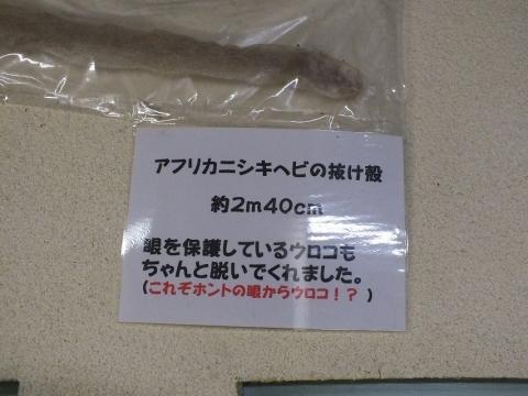 kusatsu-1_41.jpg