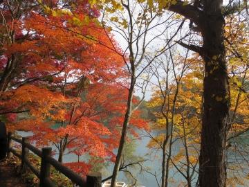 紅葉がとても綺麗でした