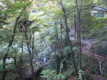 養老の滝へ向かう道
