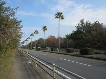前面の通り、街路樹はパームツリー