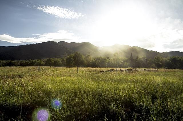 grassy-field-1031578_640.jpg
