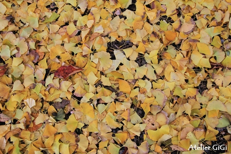 forest-5b.jpg