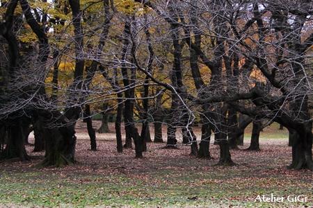 forest-5c.jpg