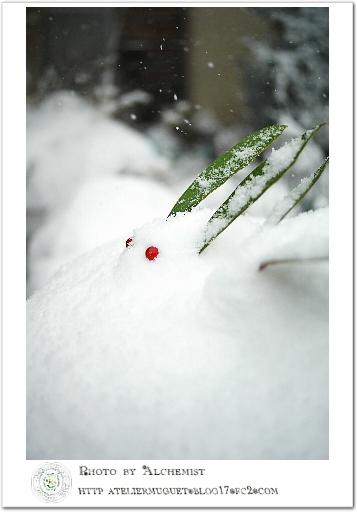1-snowr.jpg