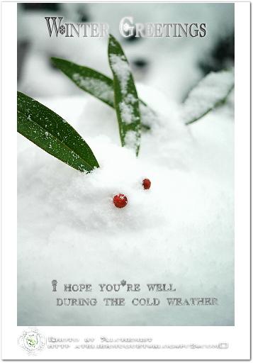 1-snowrabbit.jpg