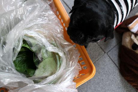 小松菜もね