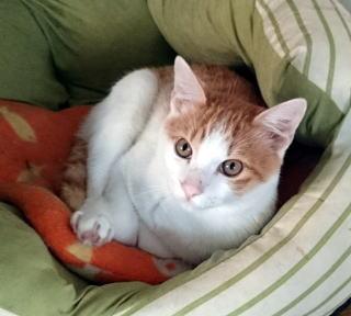 cat_ikeyou_22.jpg