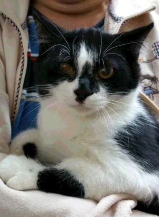 cat_mame2015_2.jpg