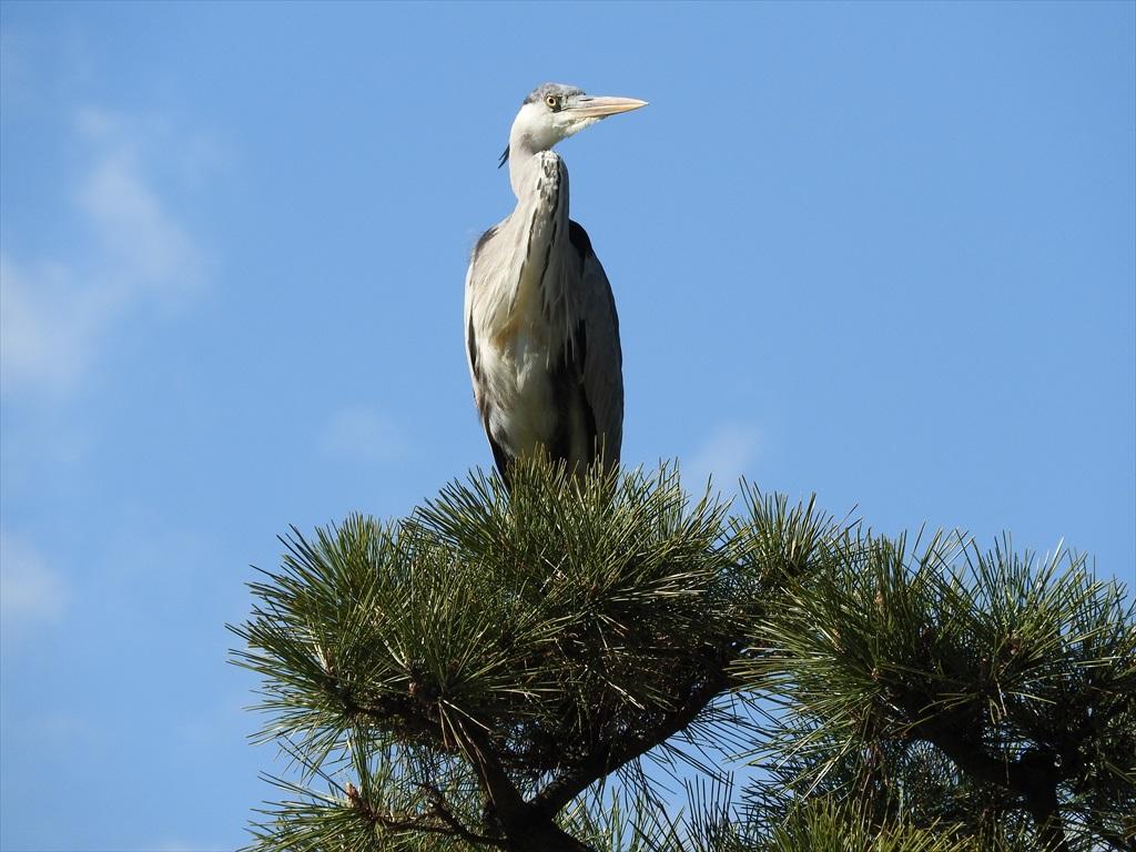 鳥さん_6