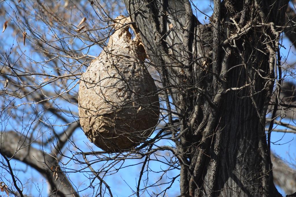 これはスズメバチの巣?