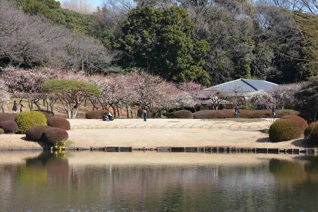 新宿御苑の上の池とその付近_1