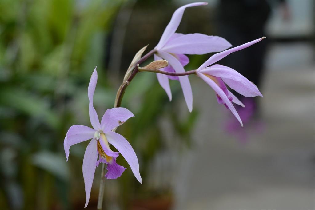 内部にあった熱帯植物_1