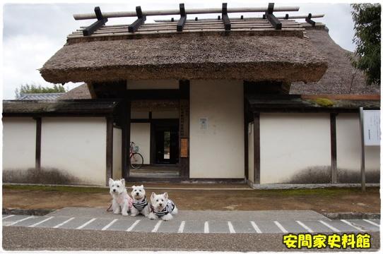 sasayama16