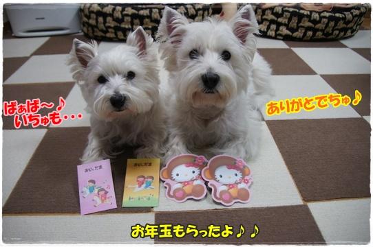 azukiai1_201601201920096b4.jpg