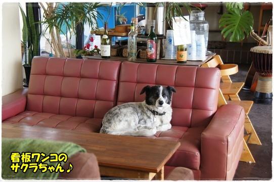 cafe5_201602242225240d2.jpg