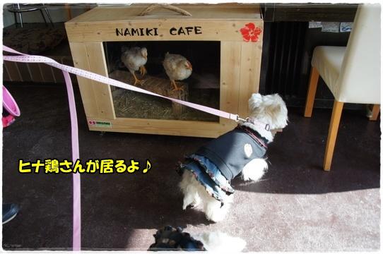 cafe_20160224220957f50.jpg
