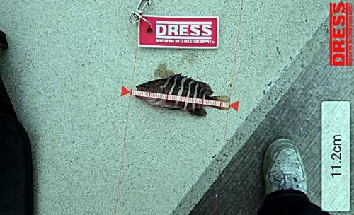 dress_06122015_150358.jpg