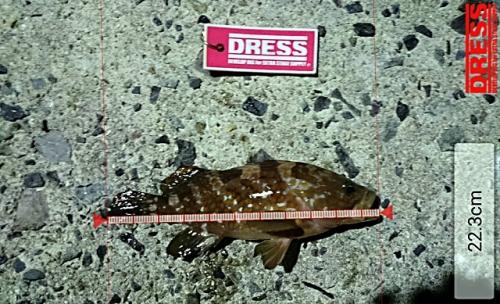 dress_20122015_011605.jpg