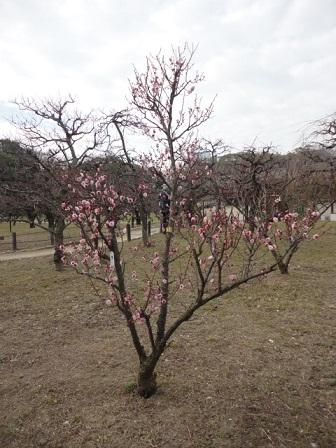 大阪城梅林⑥