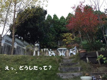 20151213_2.jpg
