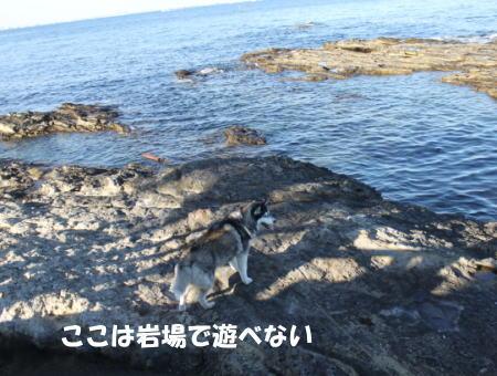 2016-01-10_9.jpg