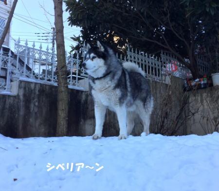 2016-01-19_7.jpg