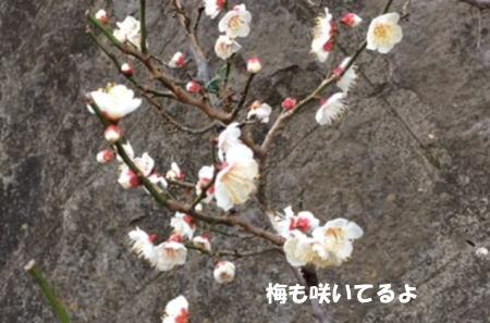 2016-02-04-2.jpg