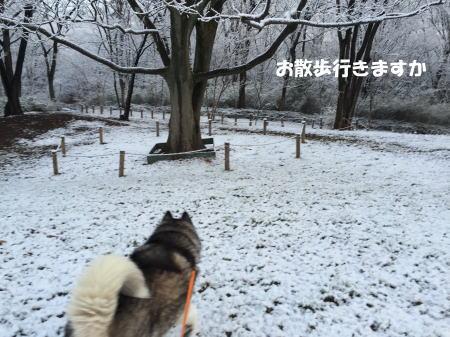 2016-02-26_3.jpg