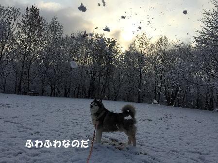 2016-02-26_5.jpg