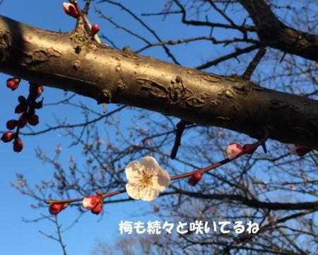 2016-02-29_3.jpg