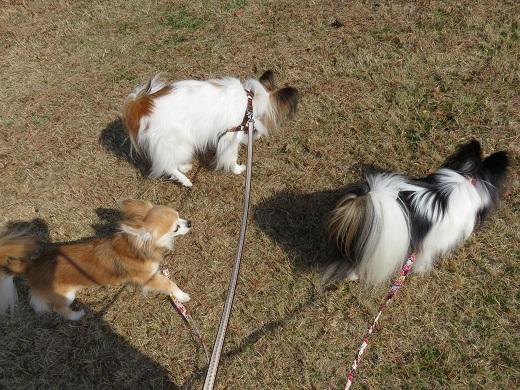 芝生を散歩