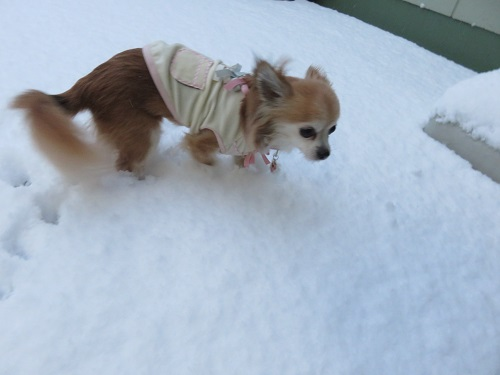 momo雪