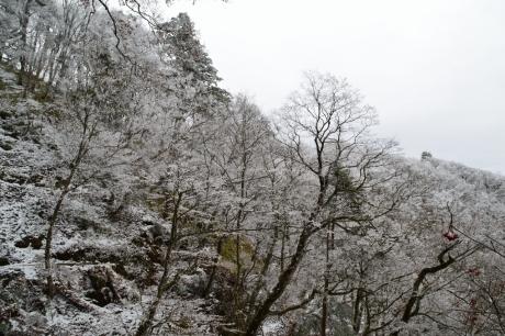 12樹氷たち