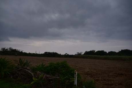 3かられたサトウキビ畑