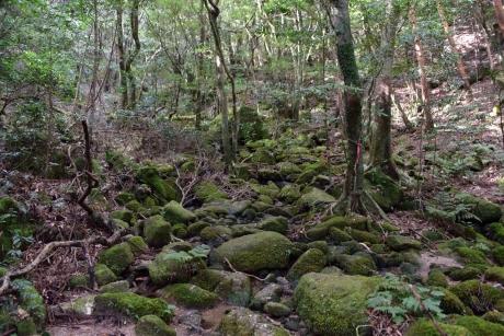 8苔むした岩と、間を流れる沢