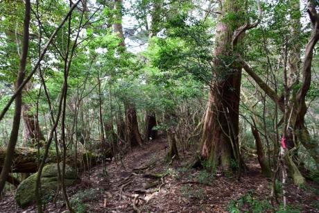 11天文の森