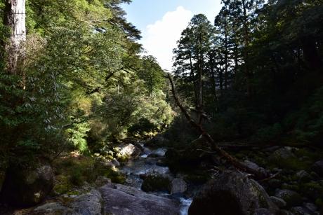 22川と流木