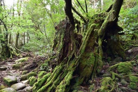 12苔苔しい