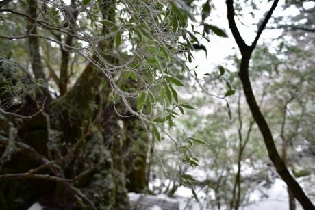 20樹氷っぽい