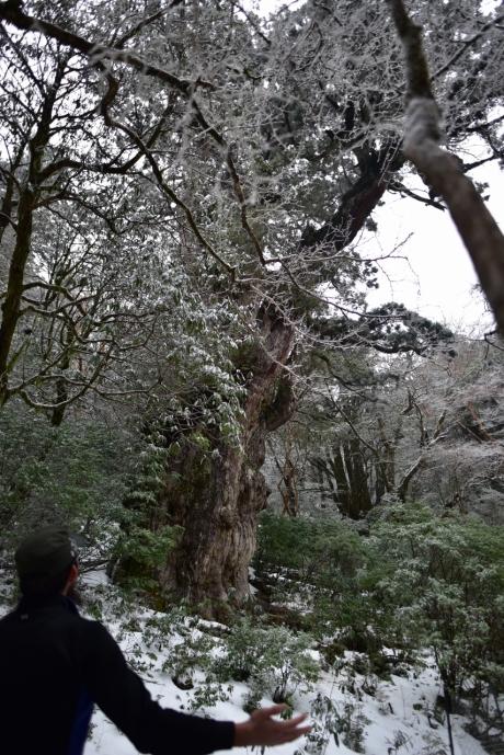 21冬の縄文杉