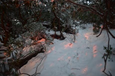 6陽が差す雪道