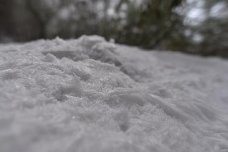 30剥がれた樹氷