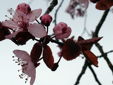 2016_spring_1.png