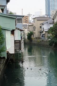 30運河の水鳥