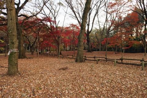 11井の頭公園雑木林