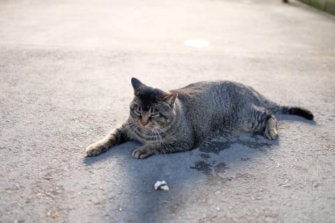 03コンビニのネコ